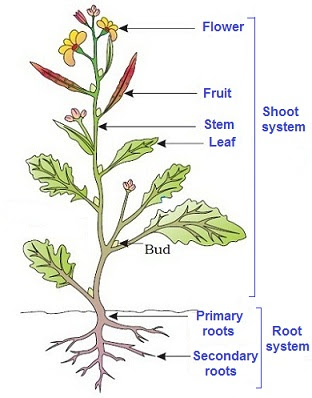 parts of a plant for class 3