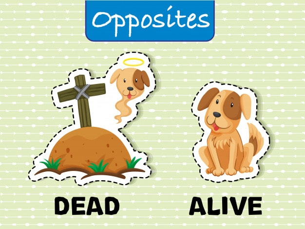 List Of Opposite Words With Pictures For Kids