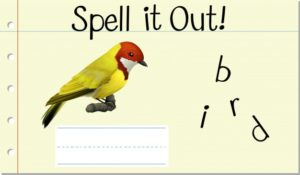 Spell It Out Bird