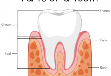Science Test - Teeth and Microbes [Class 4]