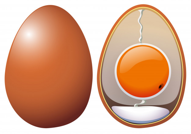 The Structure of Hen's Egg