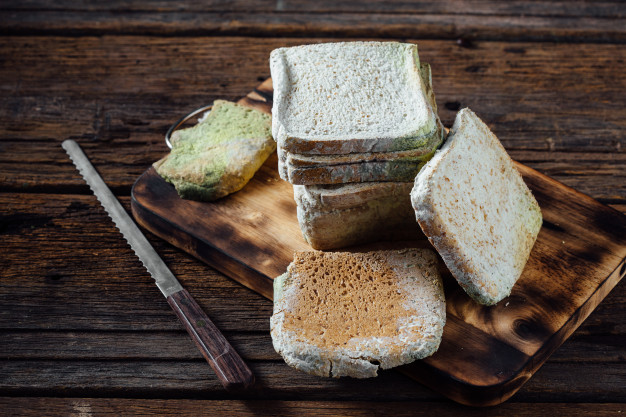 Mould on Bread